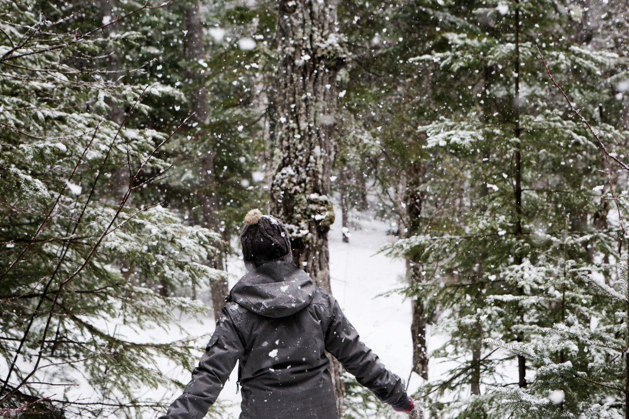 "Free photo ""Walking in Winter Forest"""