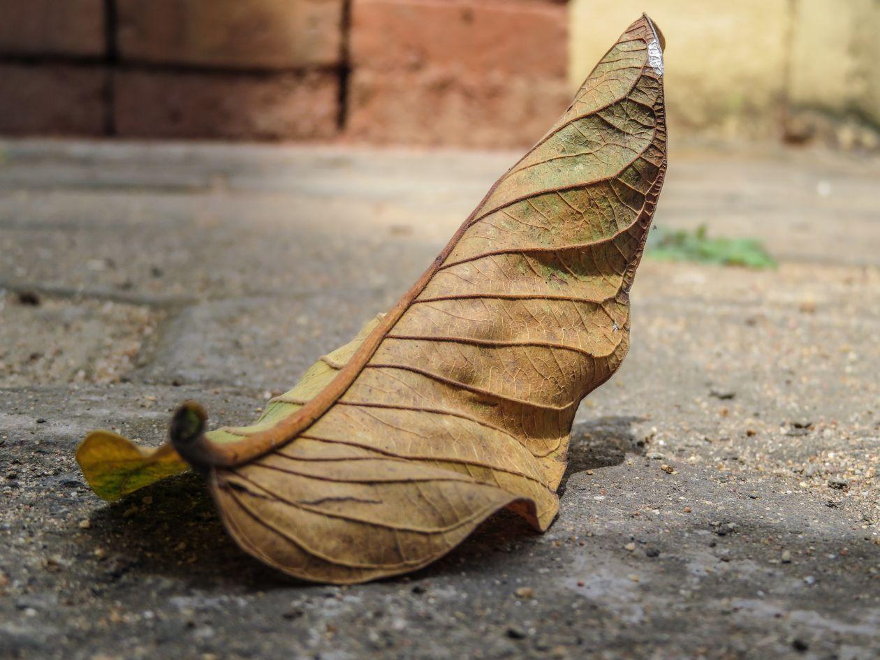 "Free photo ""Fallen Leaf Details"""