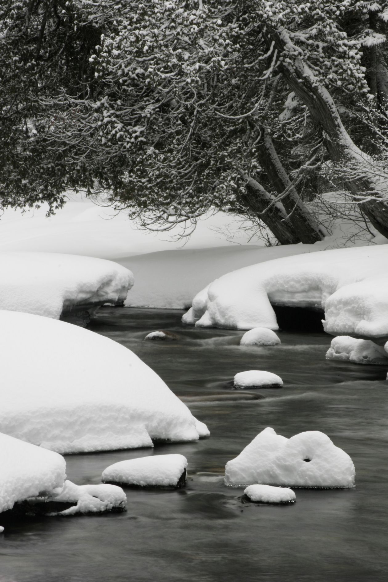 "Free photo ""Small River"""