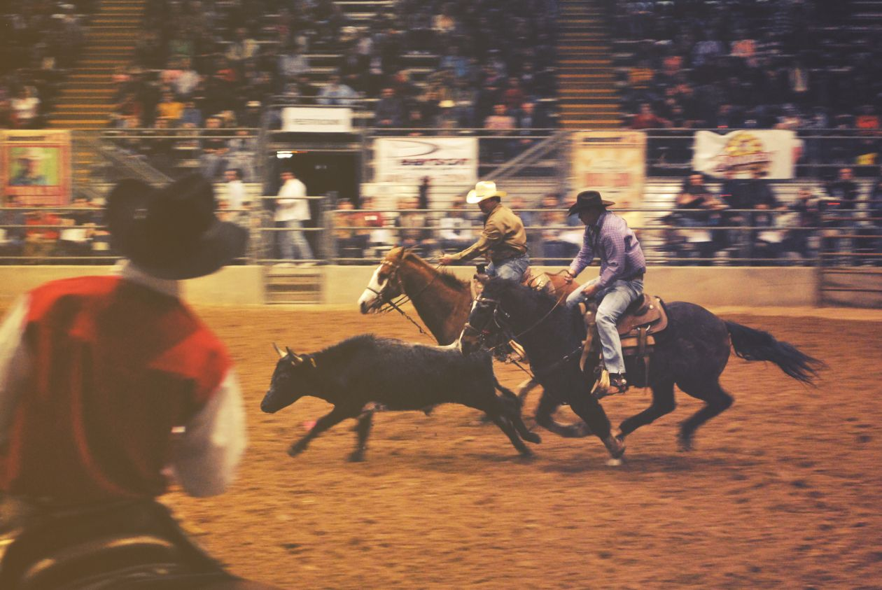 """Free photo """"Rodeo Show"""""""
