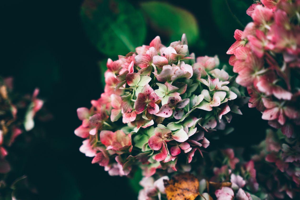 "Free photo ""Growing Flowers"""