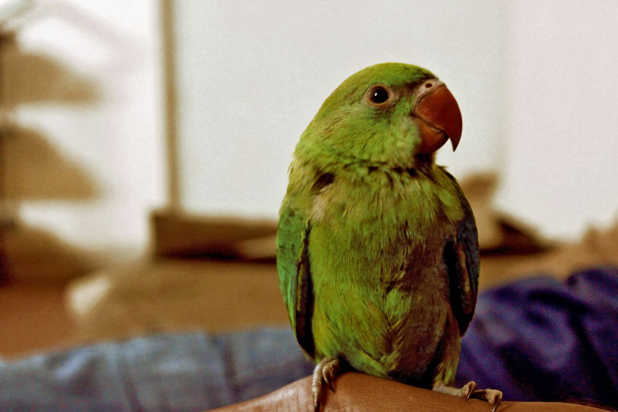 """Free photo """"Green feather"""""""