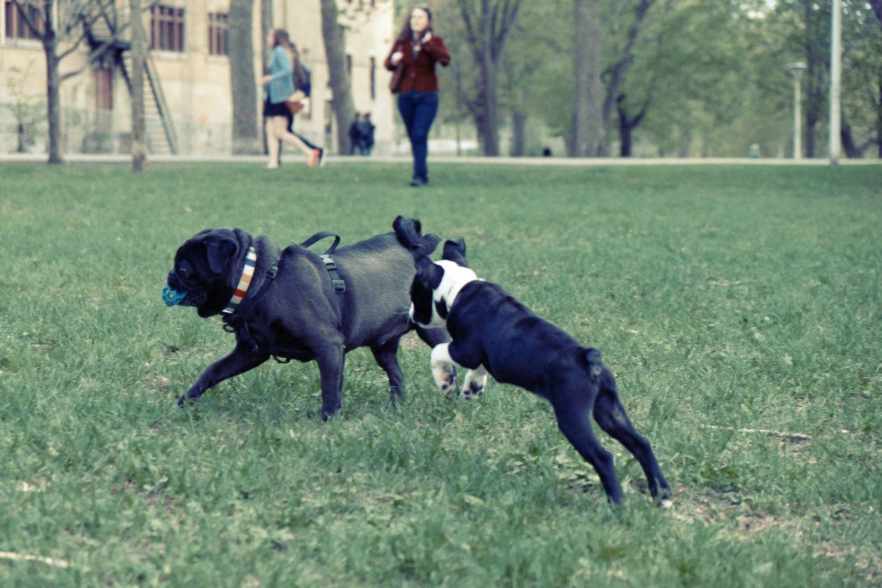"Free photo ""Dogs"""