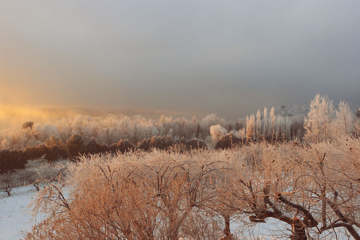 "Free photo ""Frozen morning"""