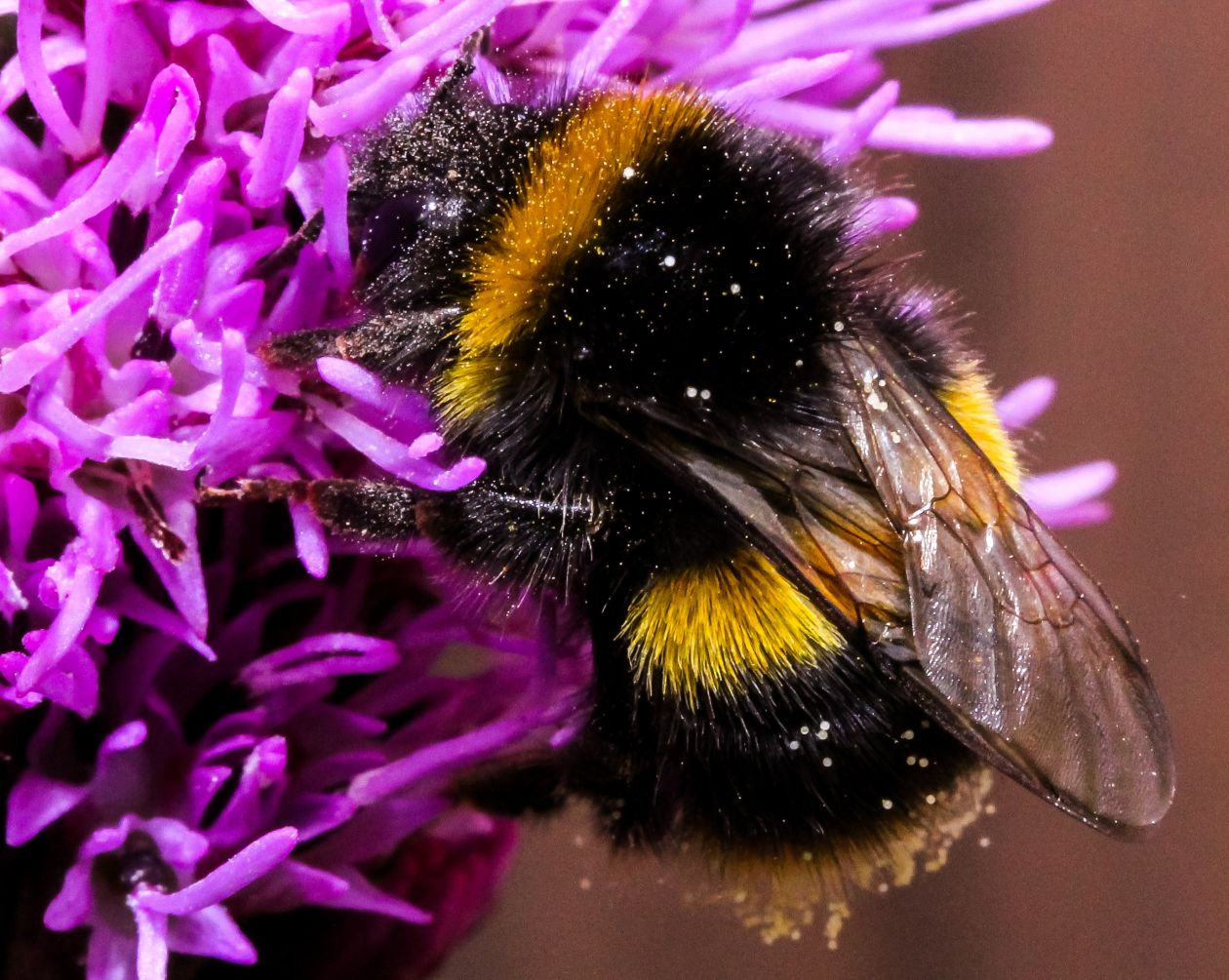 "Free photo ""Bee on Purple Flower"""
