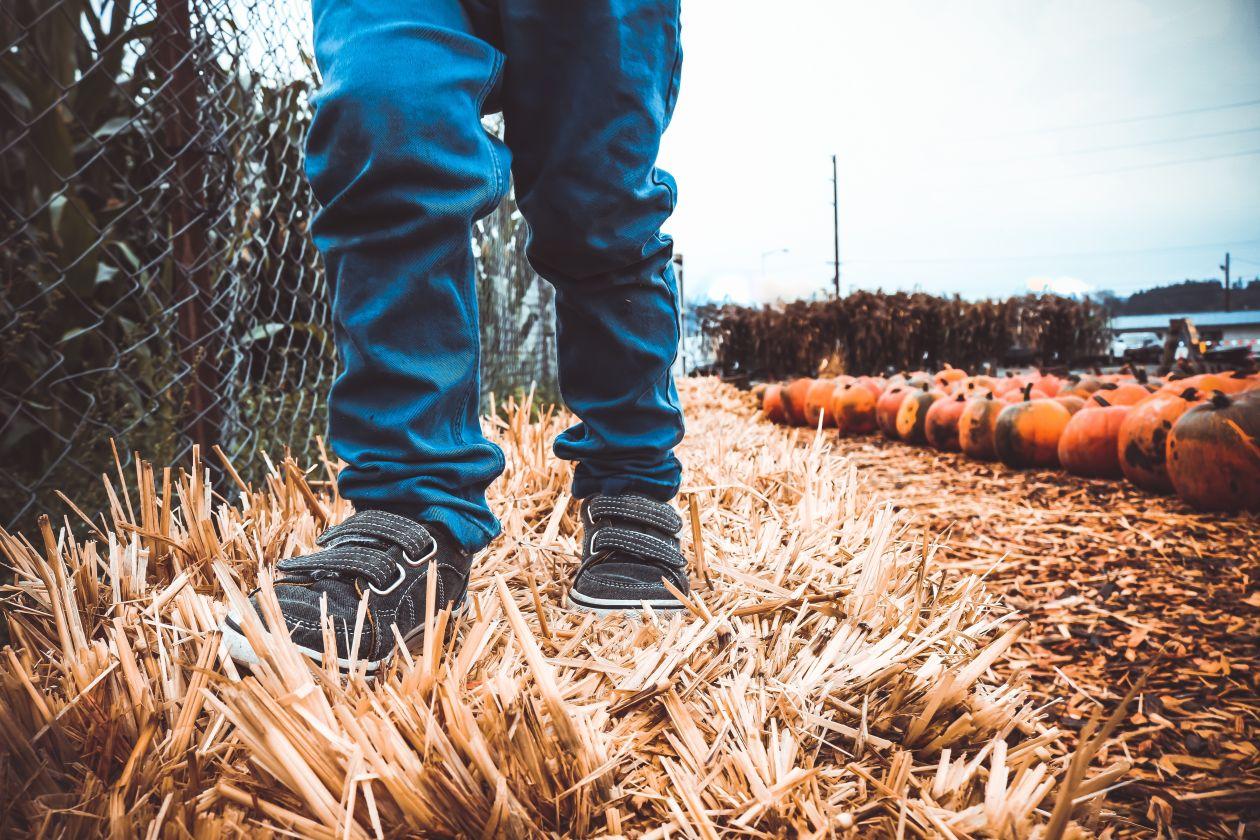 """Free photo """"Autumn"""""""