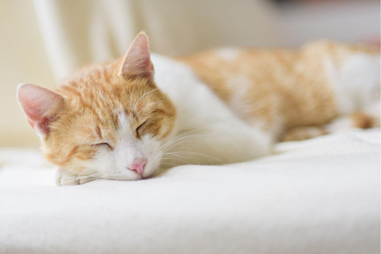 "Free photo ""Ginger Cat Lying on Floor"""