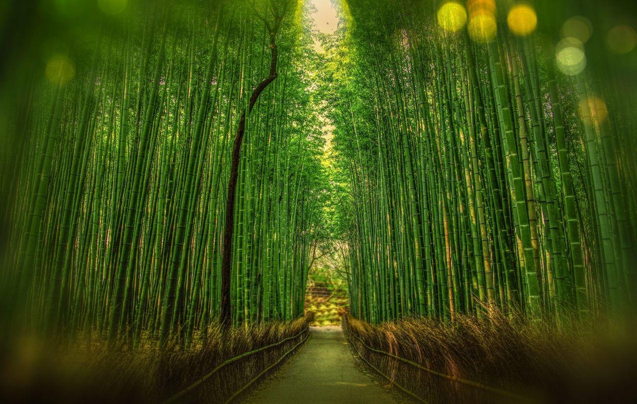 "Free photo ""Bamboo"""