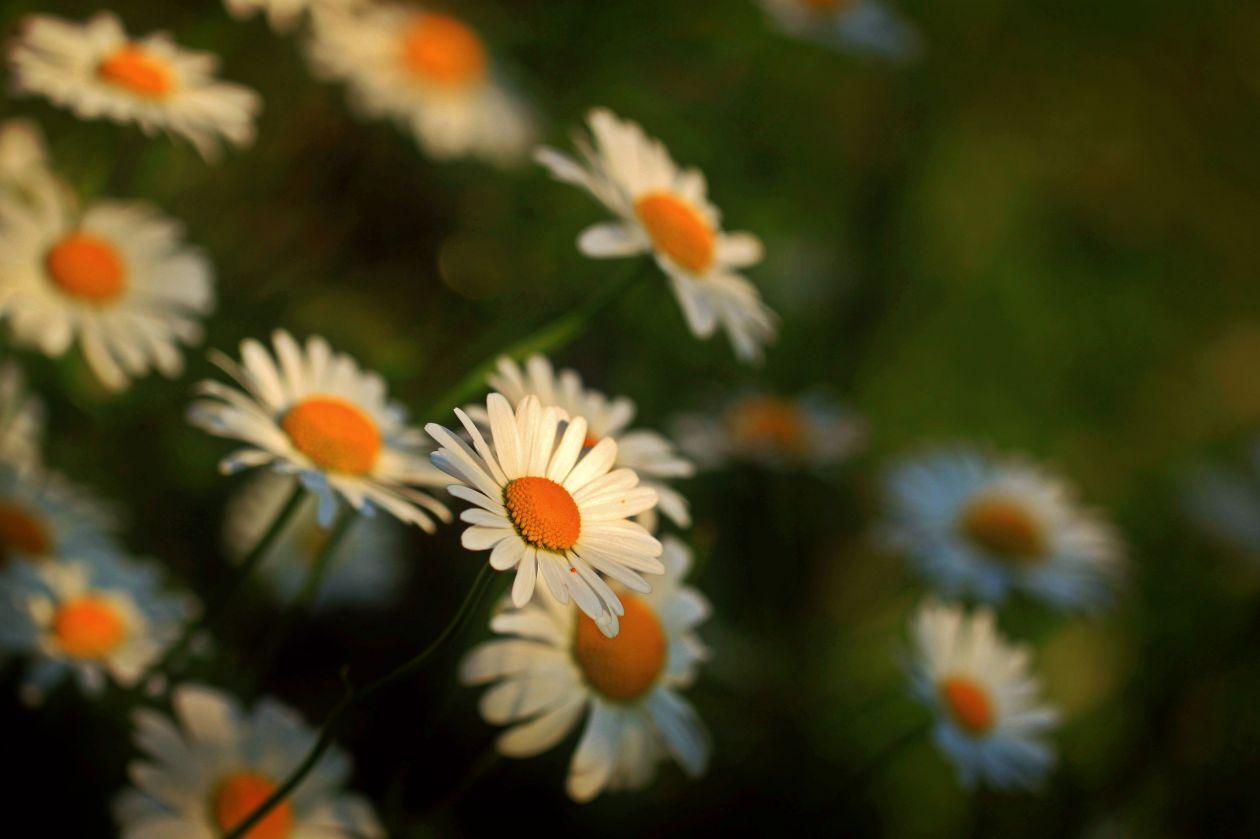 """Free photo """"Beautiful"""""""