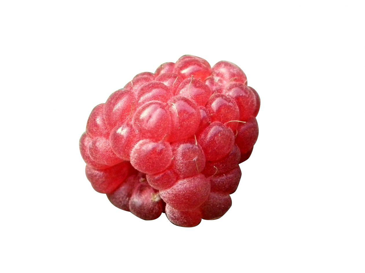 "Free photo ""Berry"""