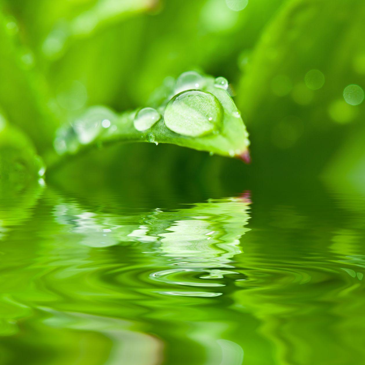 """Free photo """"Dew"""""""