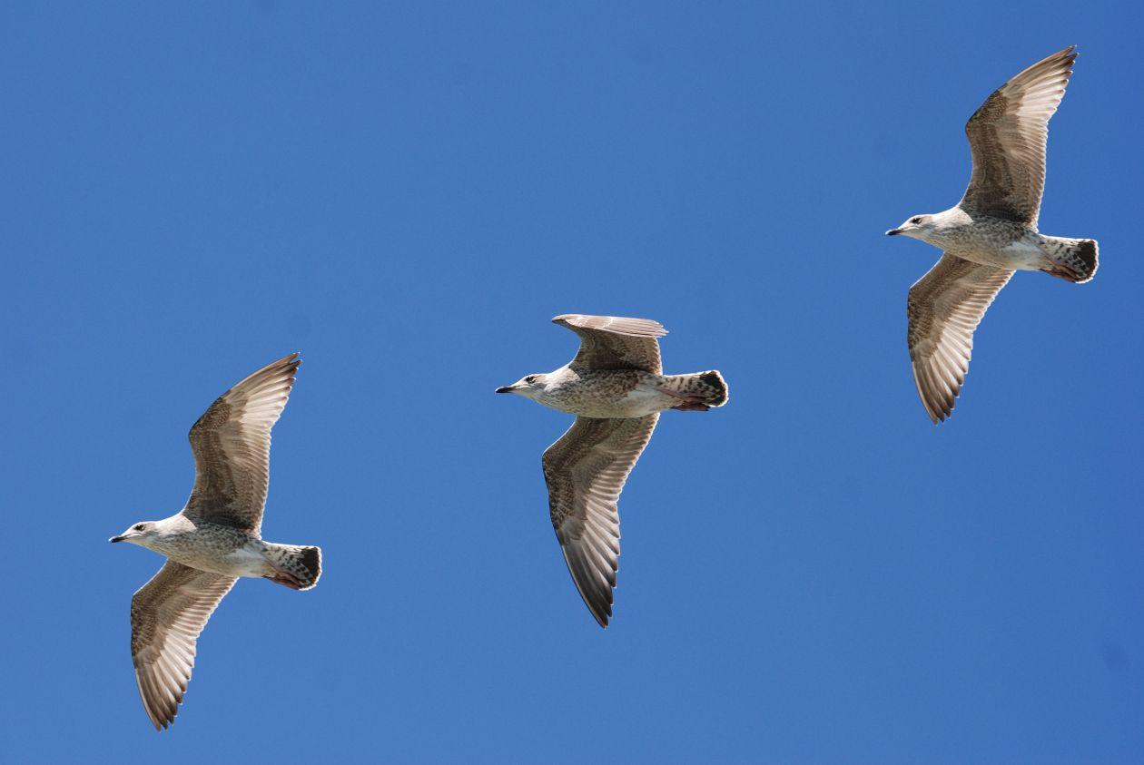 "Free photo ""Birds"""