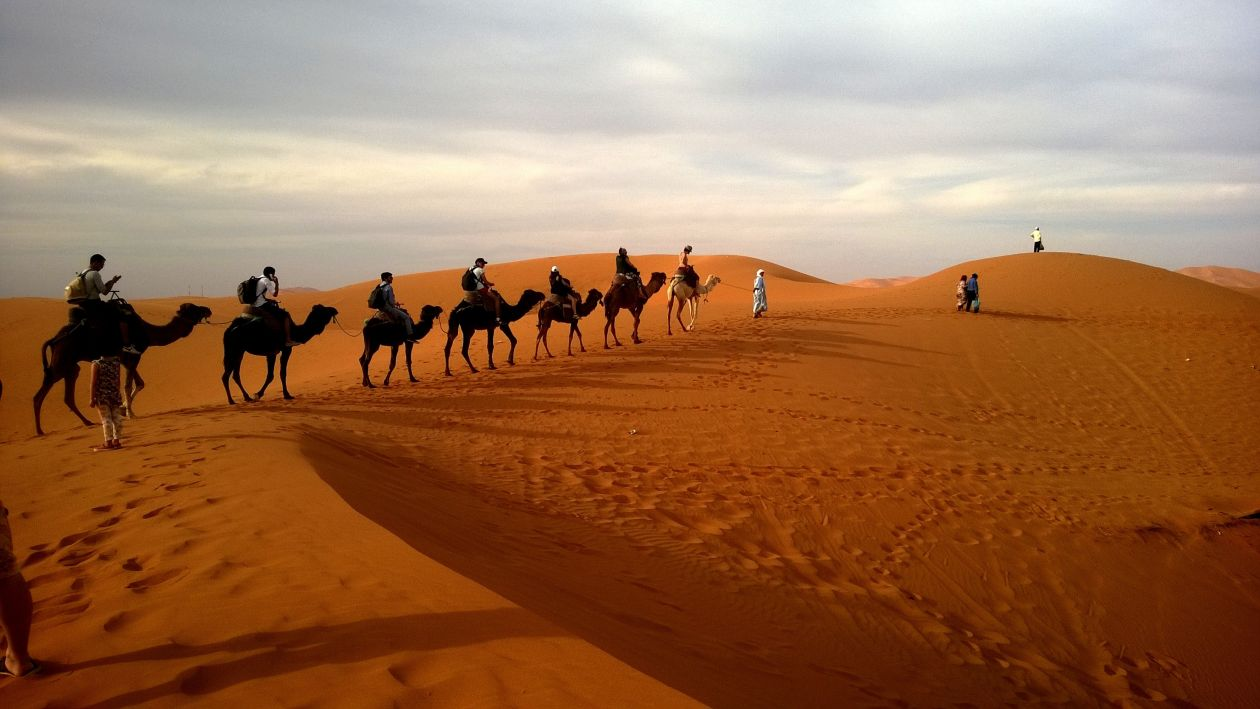 """Free photo """"Camels"""""""