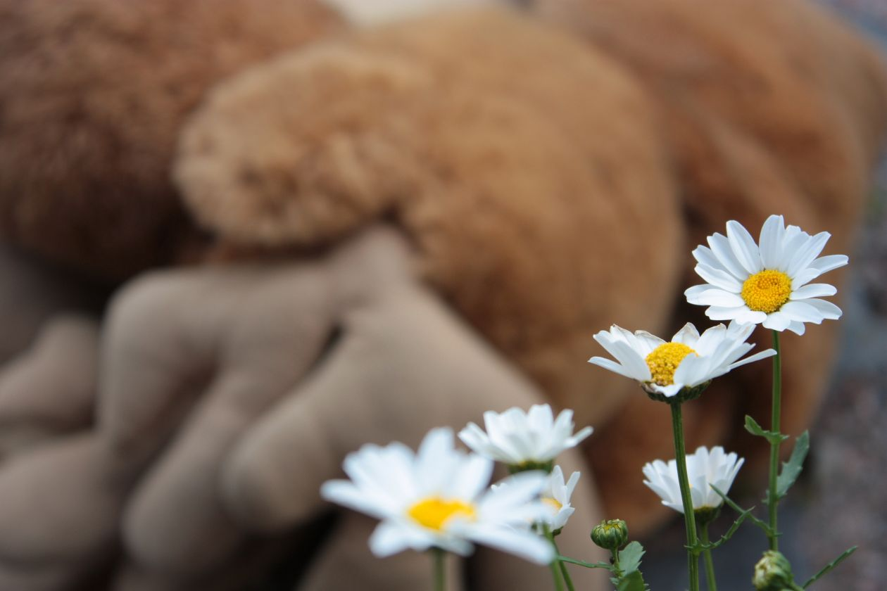 "Free photo ""Daisies"""