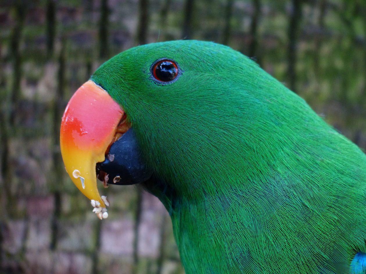 "Free photo ""Animal photography"""