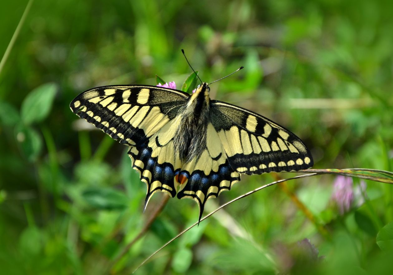 """Free photo """"Butterfly"""""""