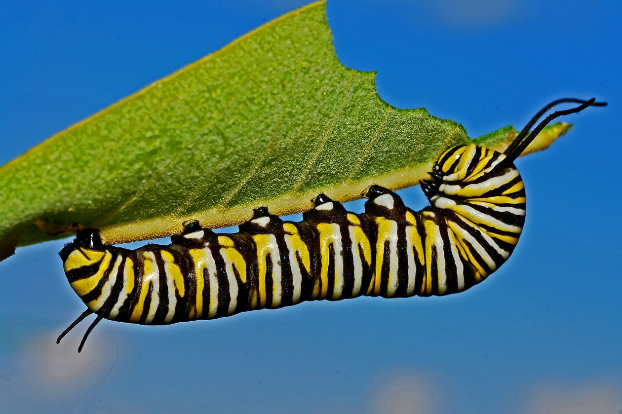 "Free photo ""Caterpillar"""