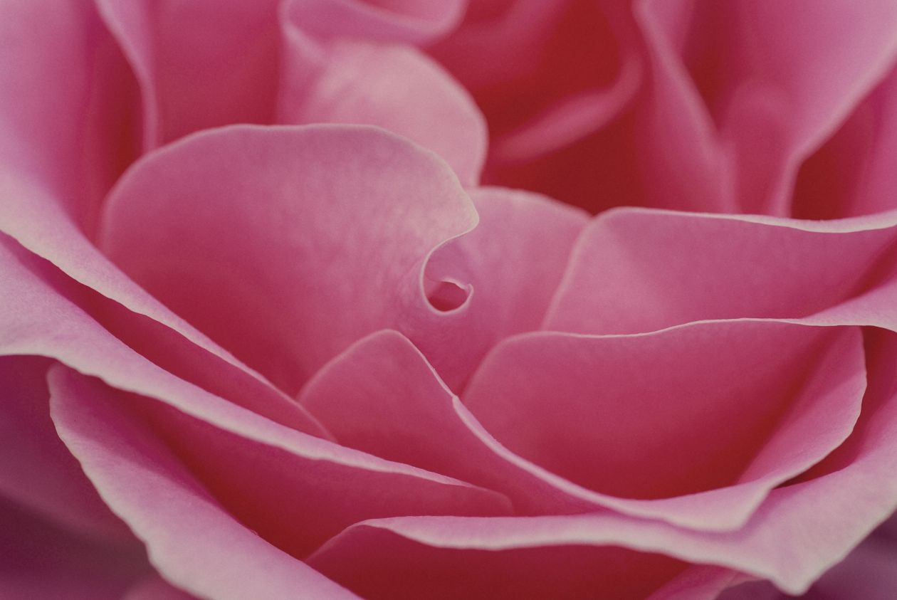 "Free photo ""Blossom"""