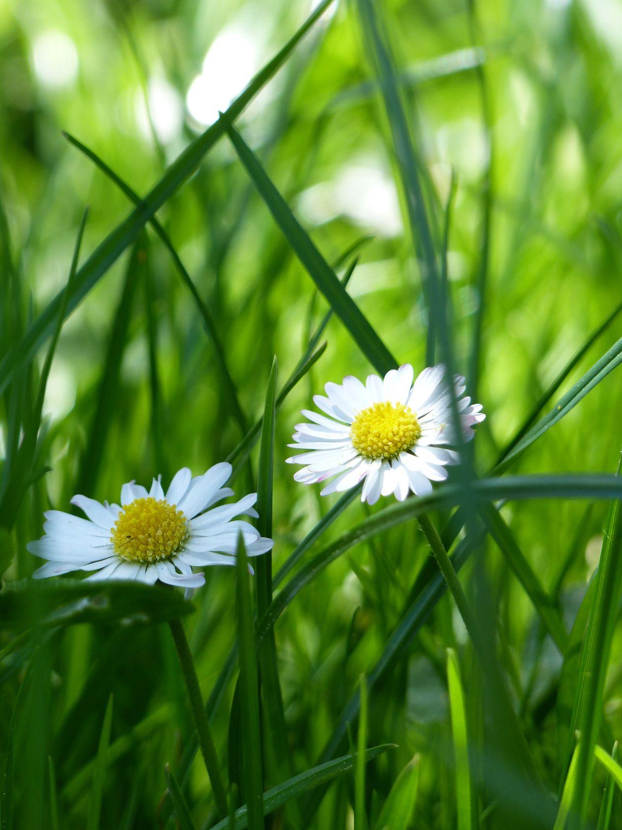"Free photo ""Bloom"""