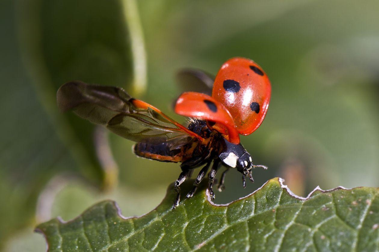"Free photo ""Beetle"""