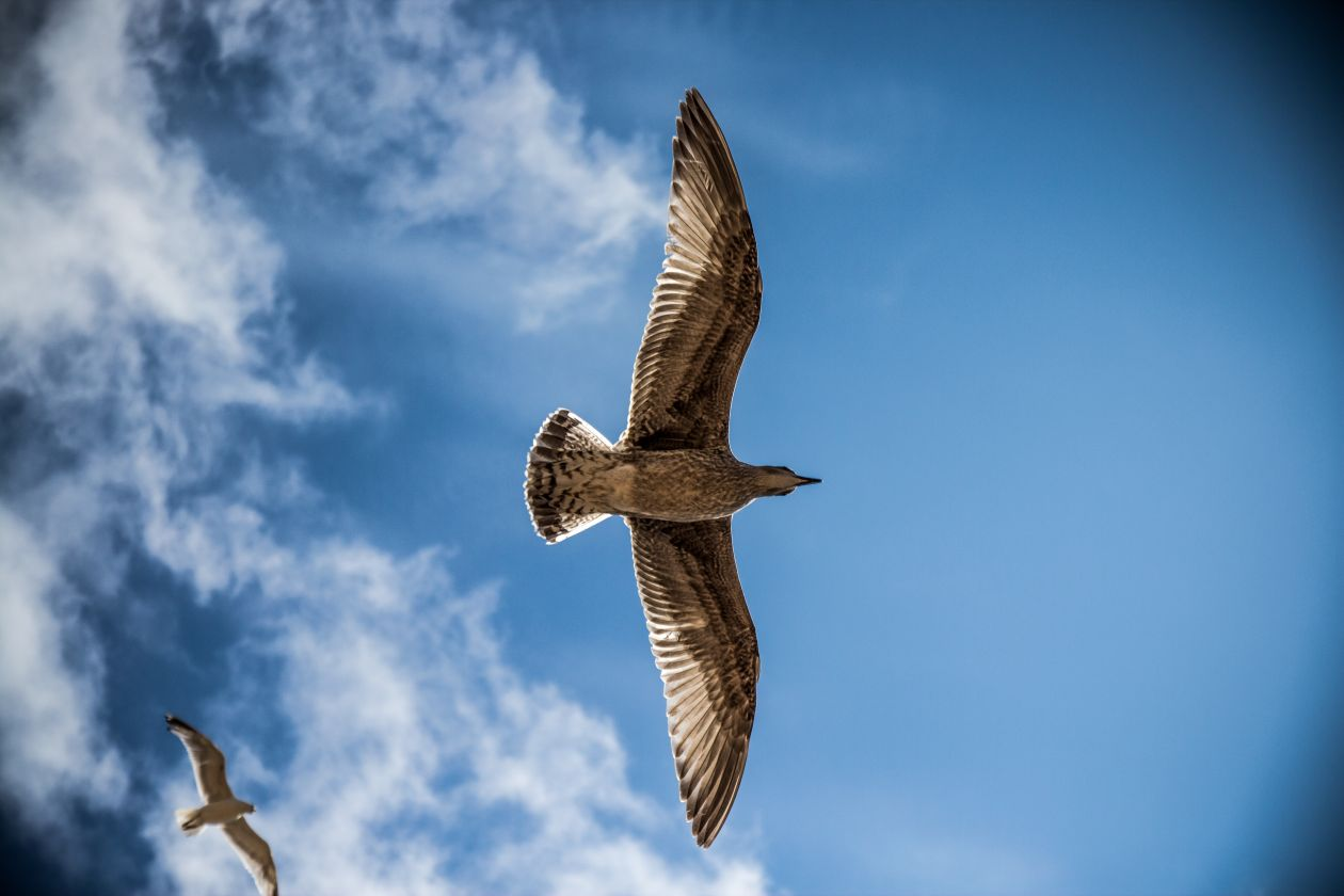"Free photo ""Bird"""