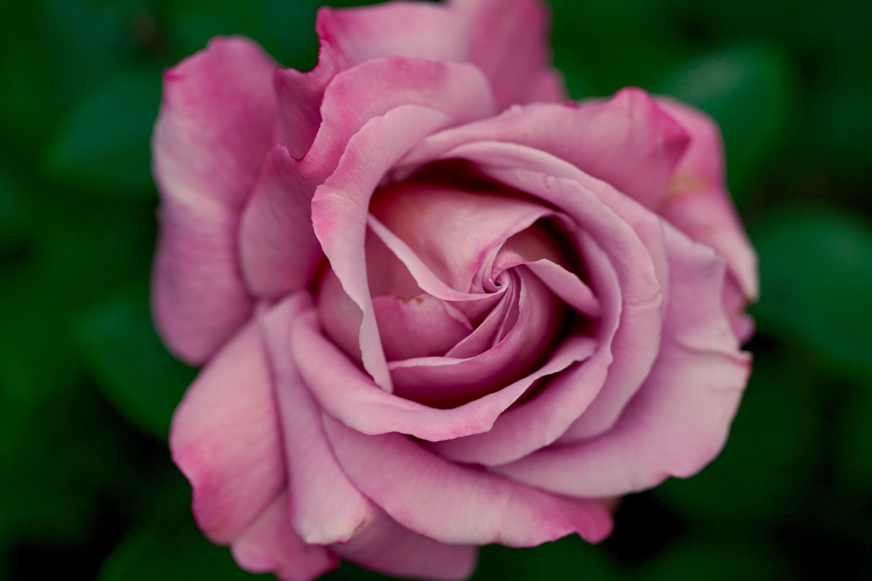 "Free photo ""Blooming"""