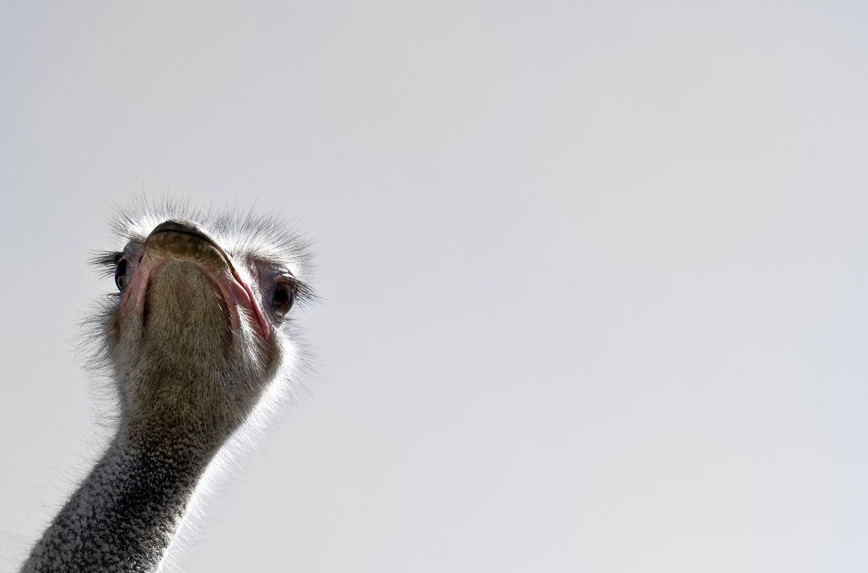 """Free photo """"Beak"""""""