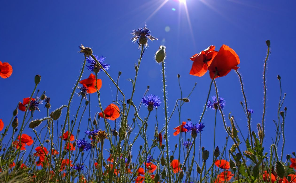 "Free photo ""Flowers"""