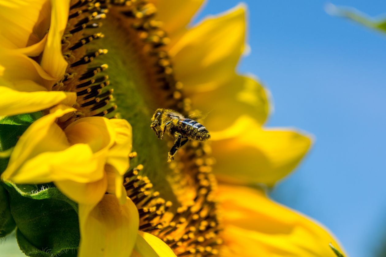 "Free photo ""Bee"""