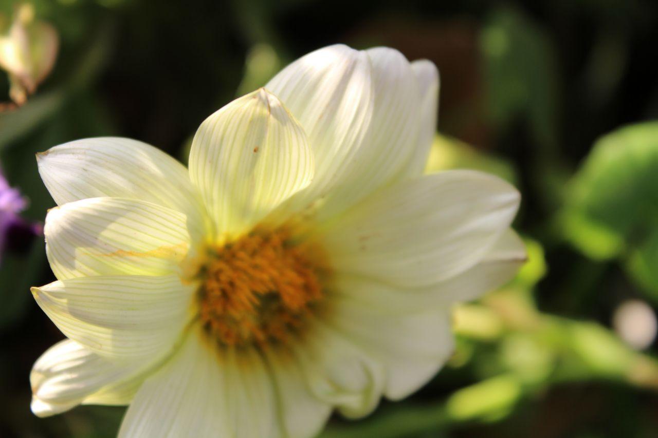 """Free photo """"Flower White Greenish"""""""