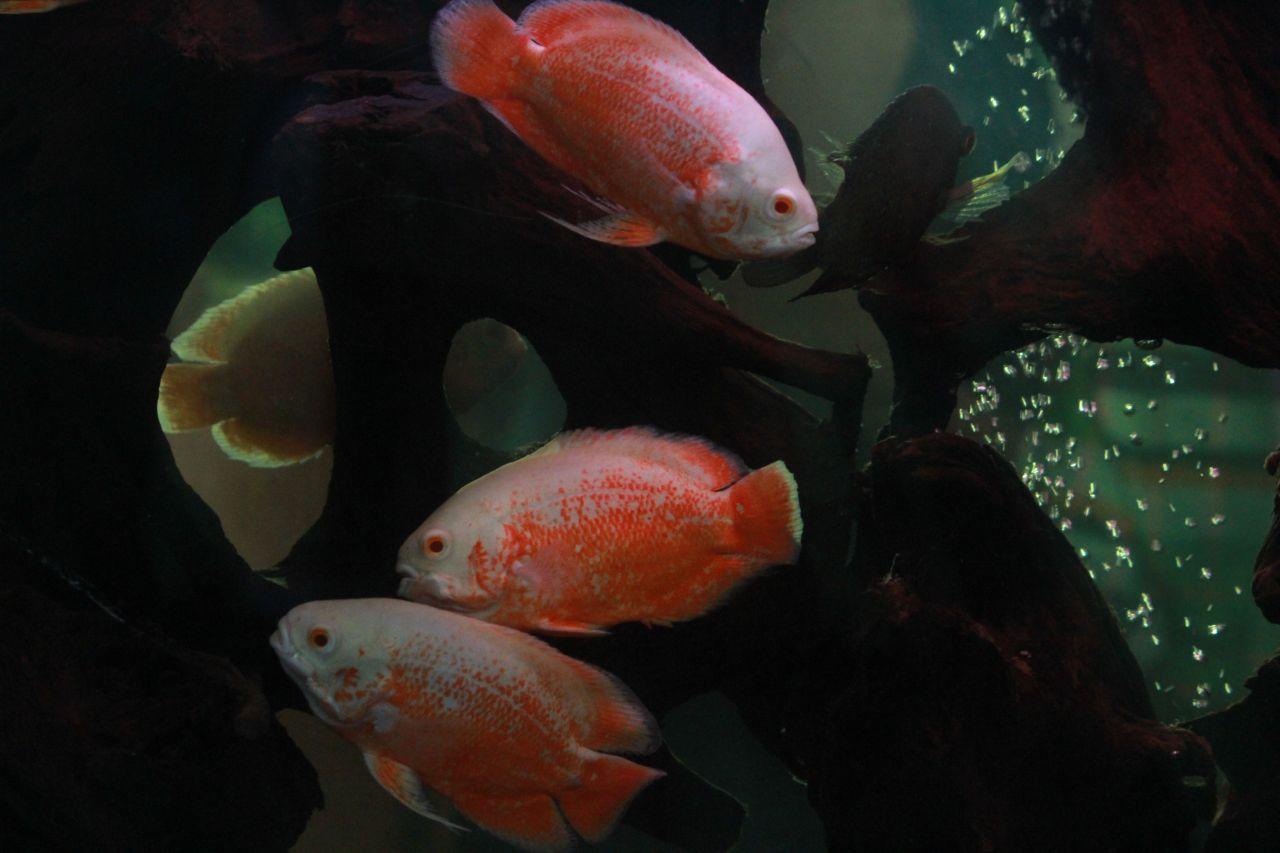 "Free photo ""Dark Waters Fishes"""