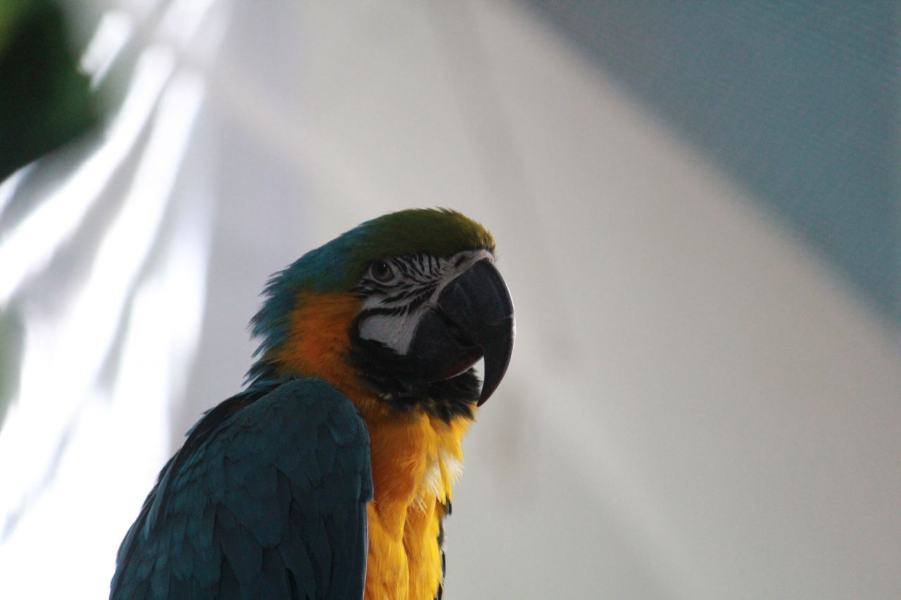 "Free photo ""Parrot Macaw"""