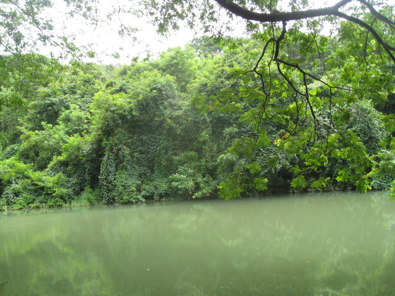 """Free photo """"Green Water Lake"""""""