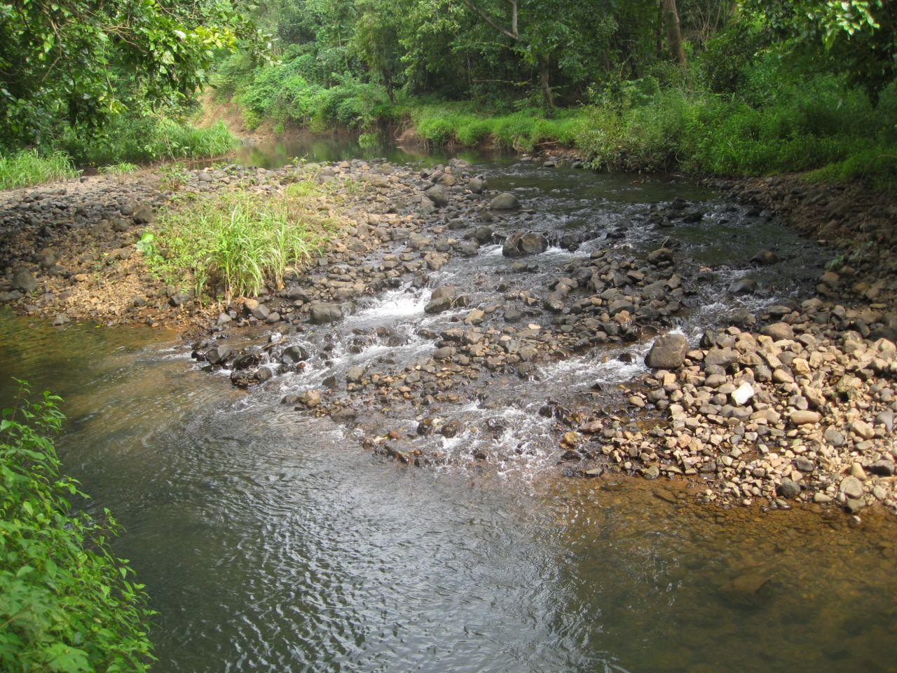"""Free photo """"Stream Water Greenery"""""""