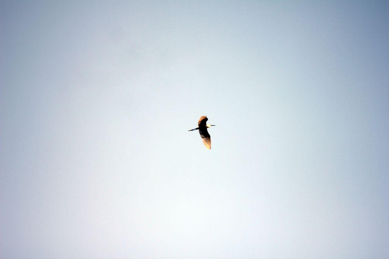 "Free photo ""Bird Flying"""