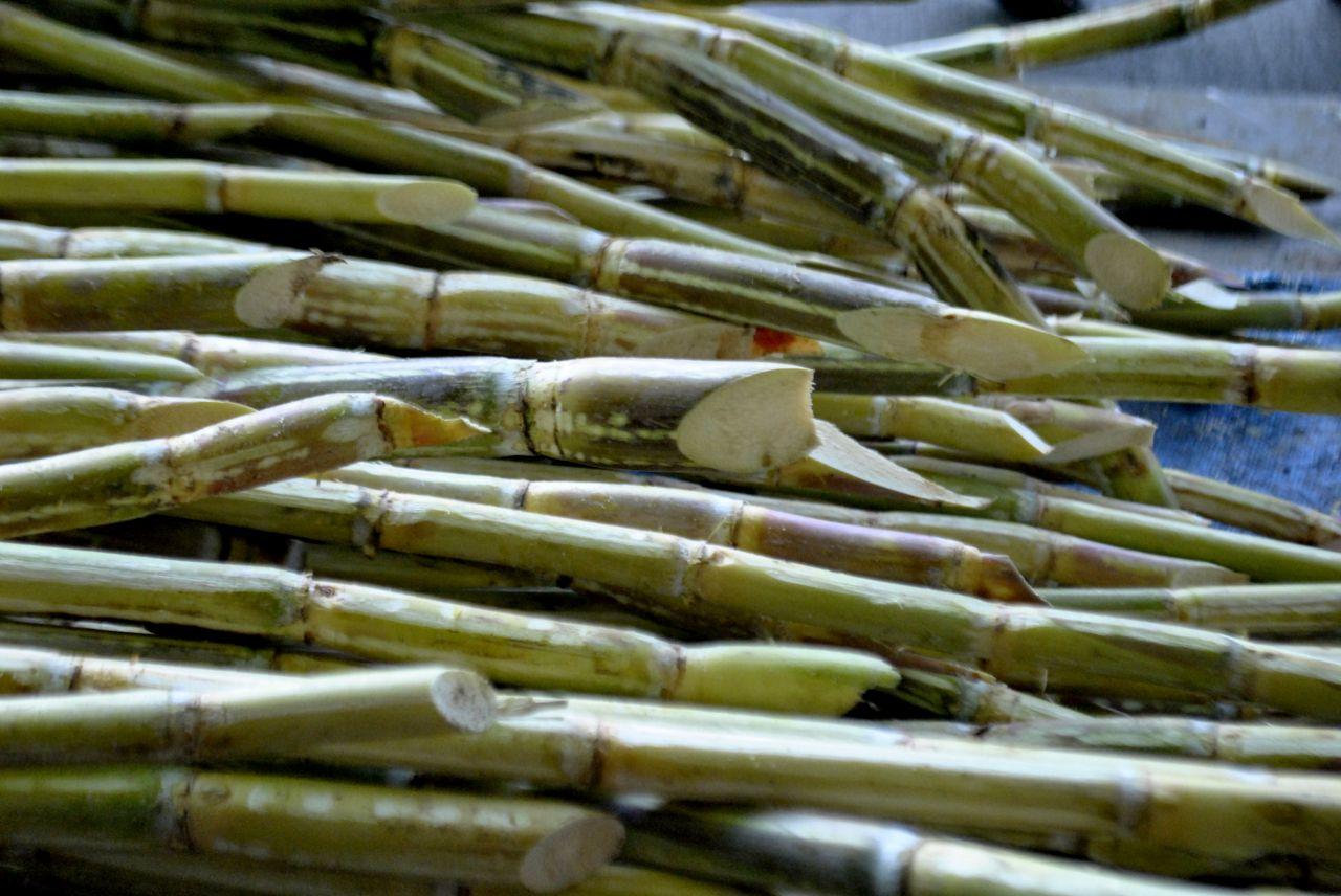 """Free photo """"Sugarcane"""""""