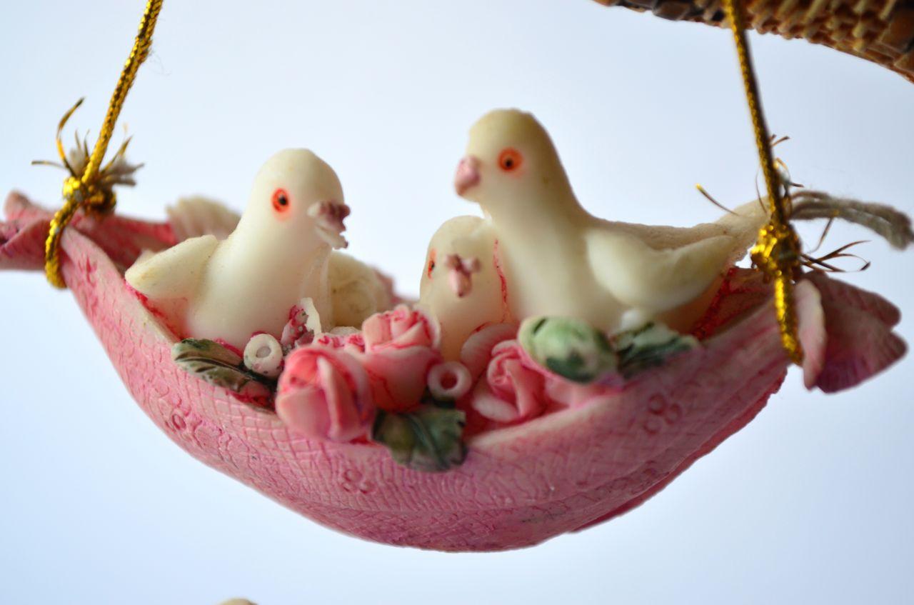 "Free photo ""Dove Love Family"""