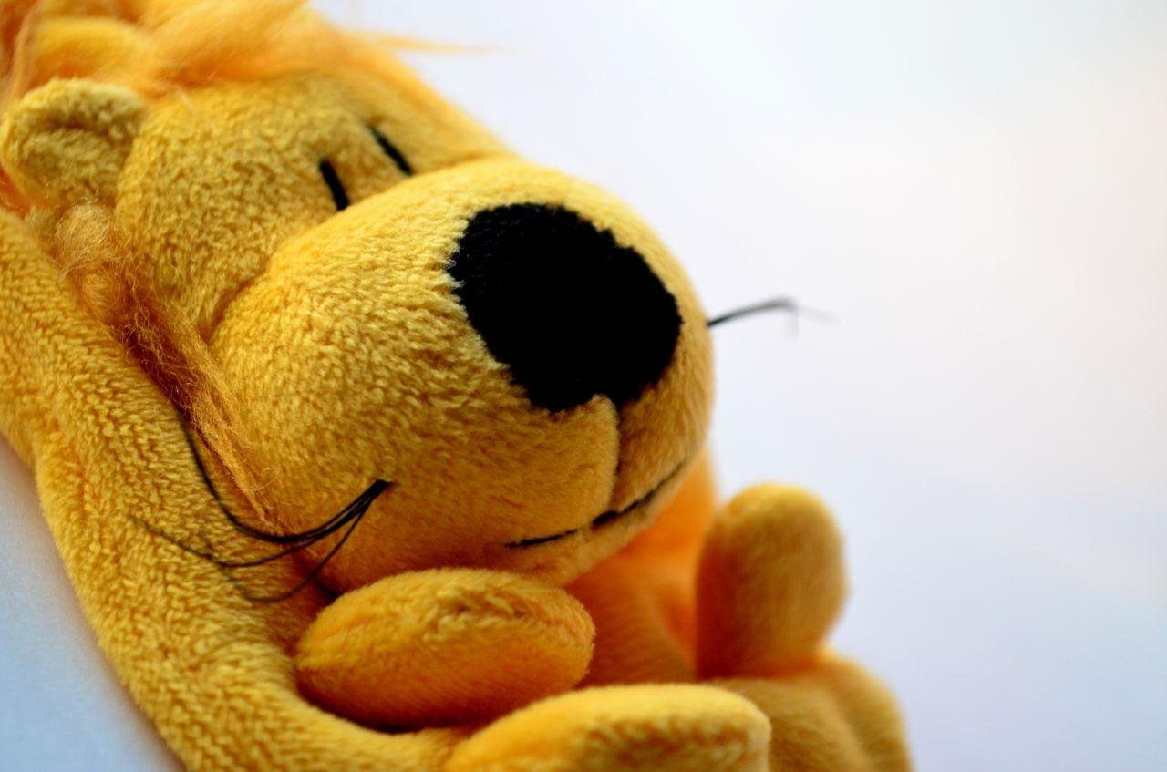 "Free photo ""Yellow Dog Cute"""