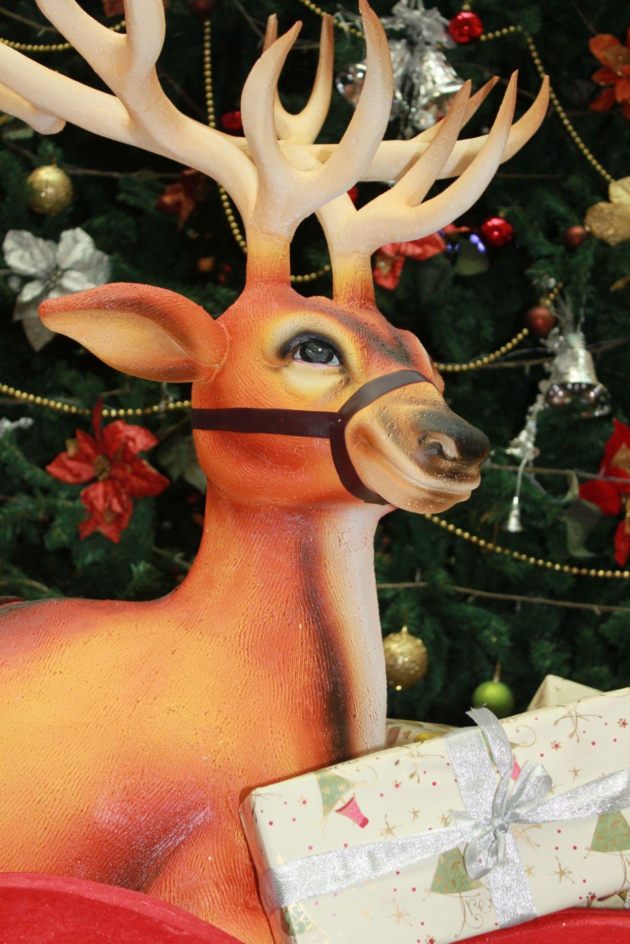 "Free photo ""Reindeer Closeup Gift"""
