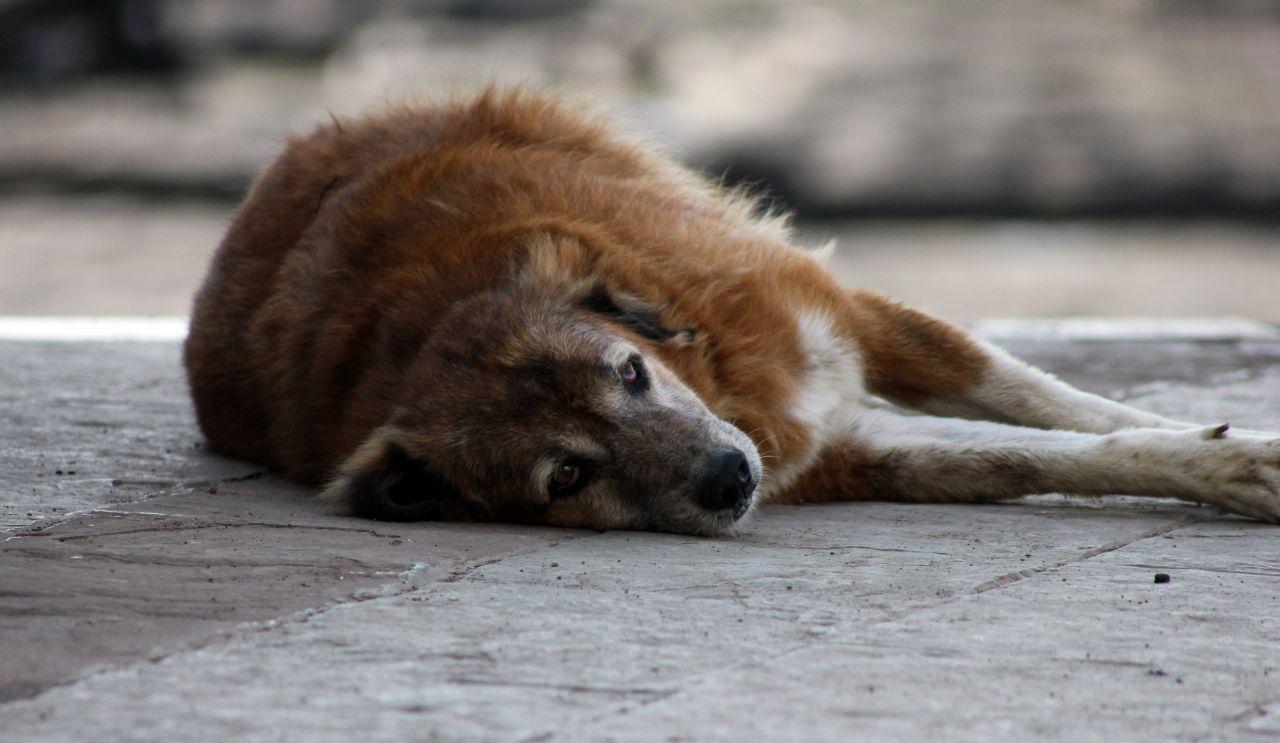 "Free photo ""Dog Sleeping Pavement"""