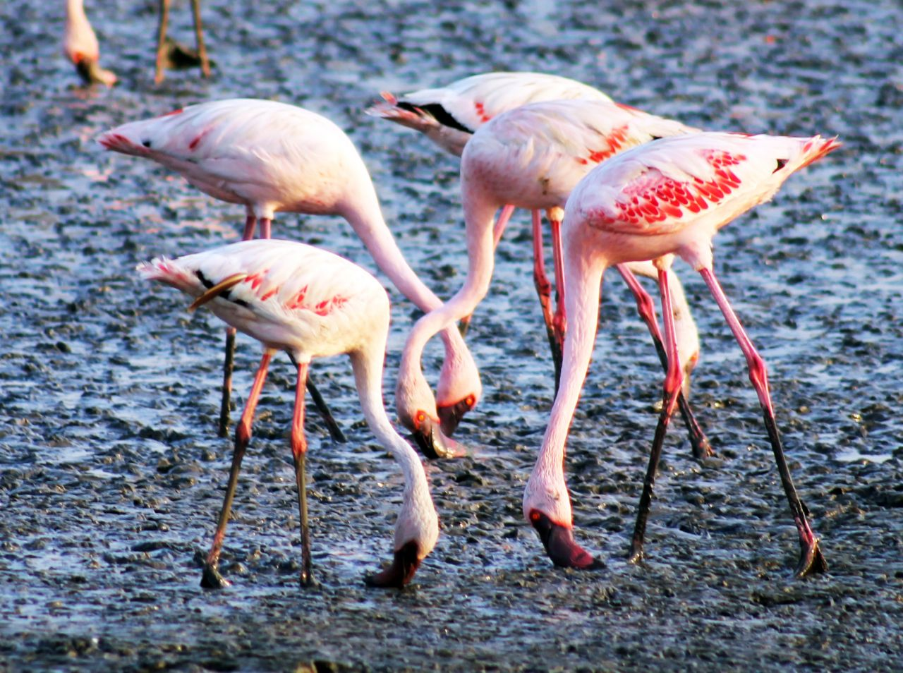 "Free photo ""Flamingo Birds 2"""