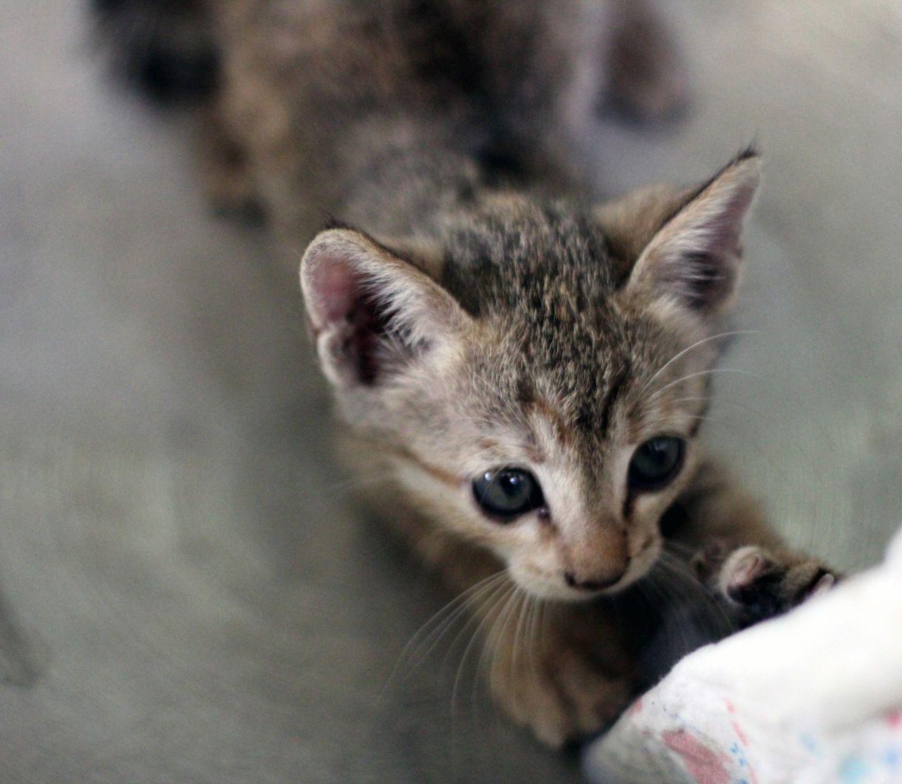 "Free photo ""Kitty Cute"""