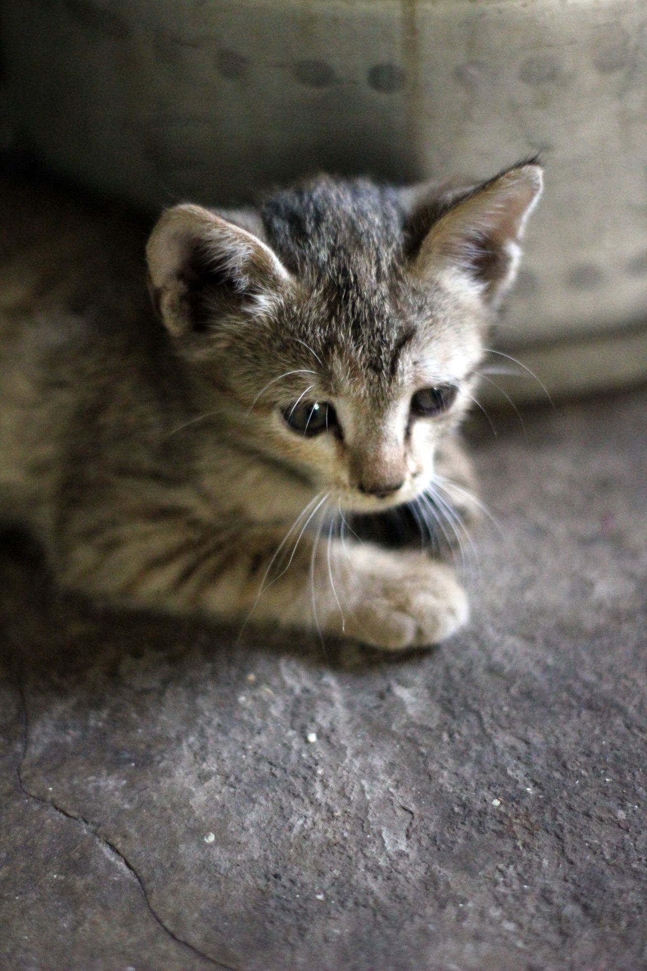 "Free photo ""Kitten Very Cute"""