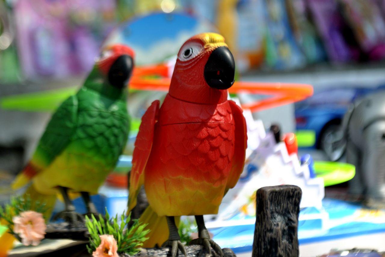 """Free photo """"Parrot Toys"""""""