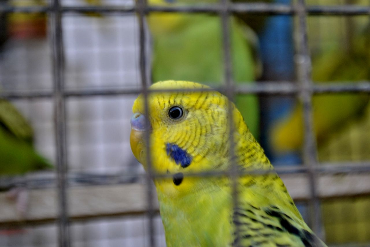 "Free photo ""Bird In Cage Yellow"""