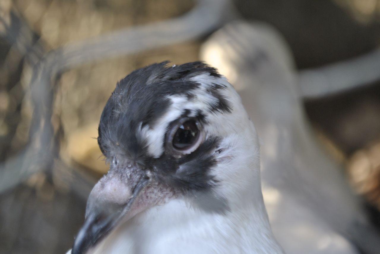 "Free photo ""Bird Pet Store"""
