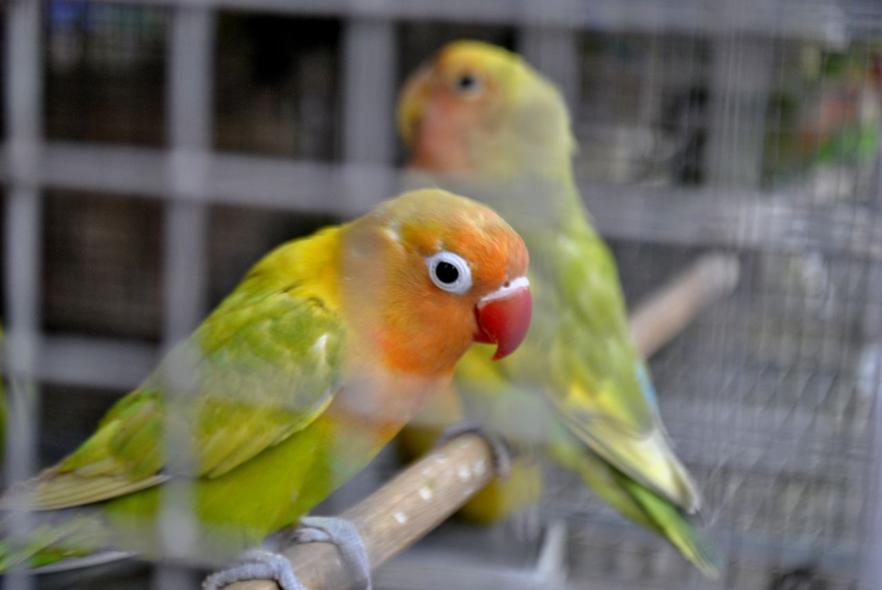 """Free photo """"Colorful Birds Pet Store"""""""