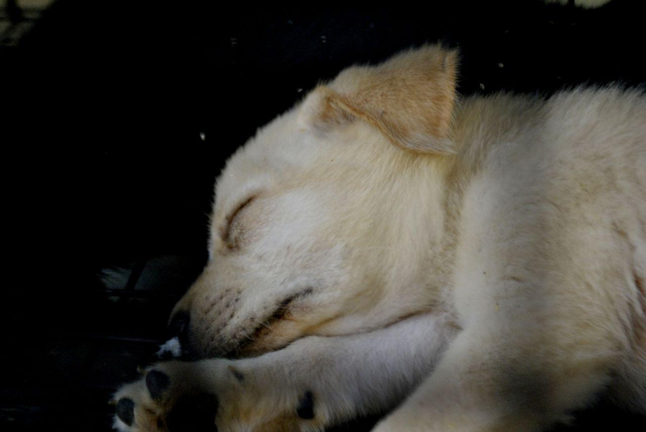 "Free photo ""Dog Sleeping Cute"""