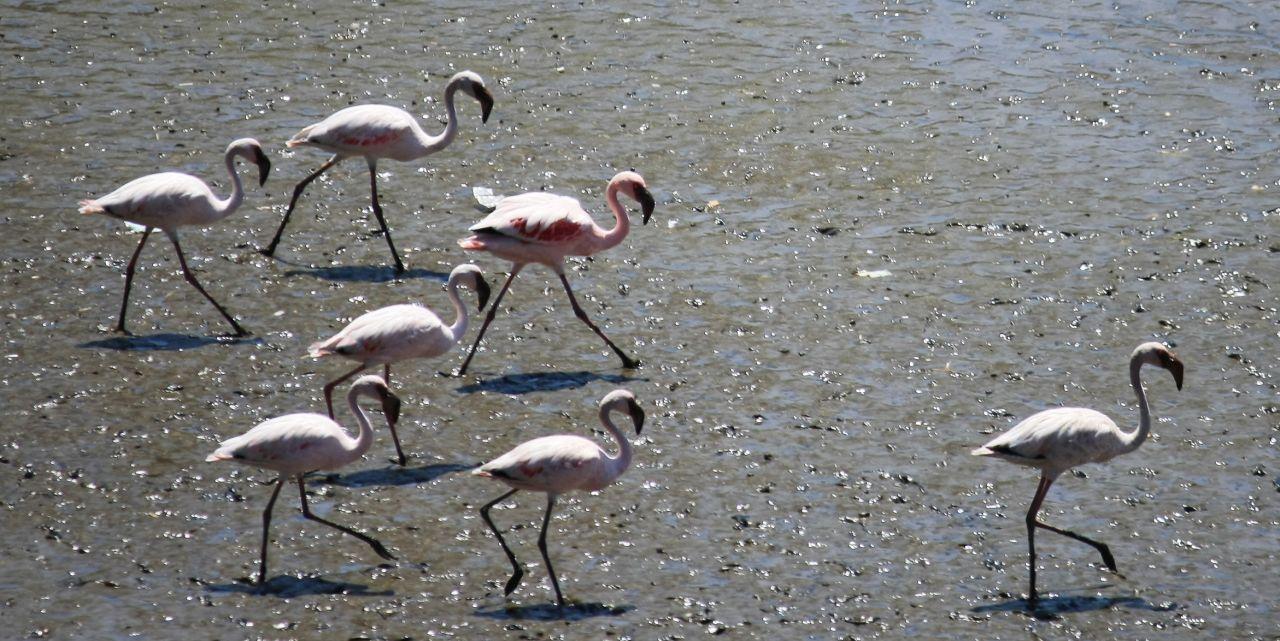 """Free photo """"Flamingos"""""""