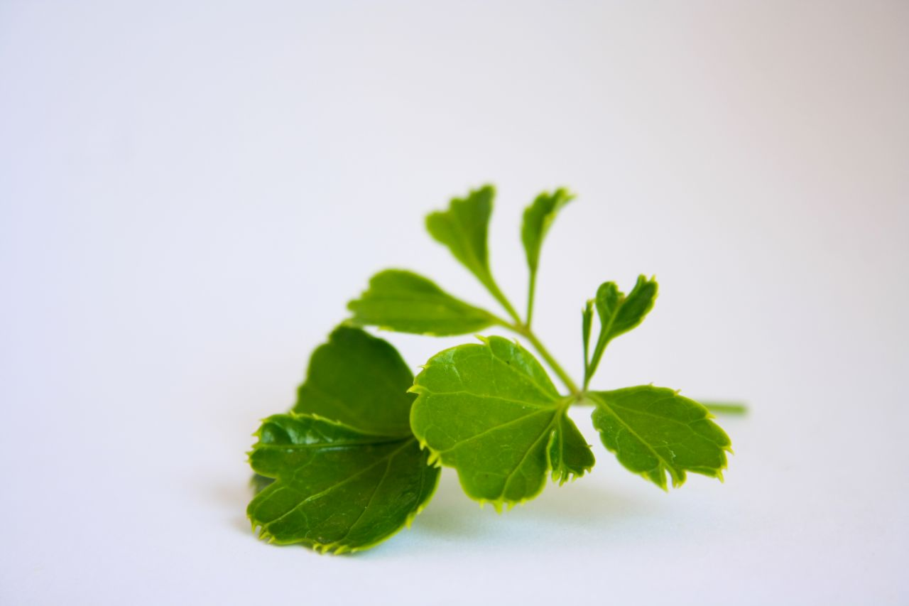 "Free photo ""Green Leaves"""
